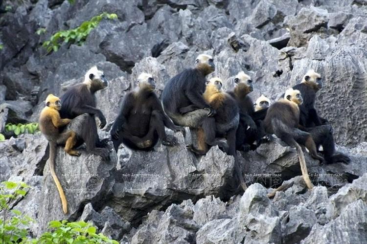 A Family of Monkeys