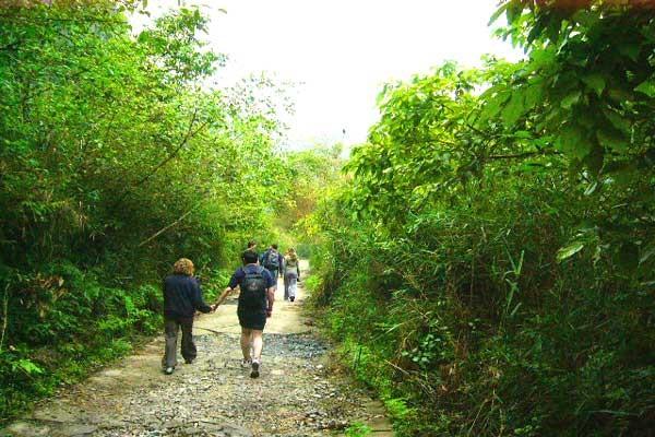 Trekking in cat Ba national Park