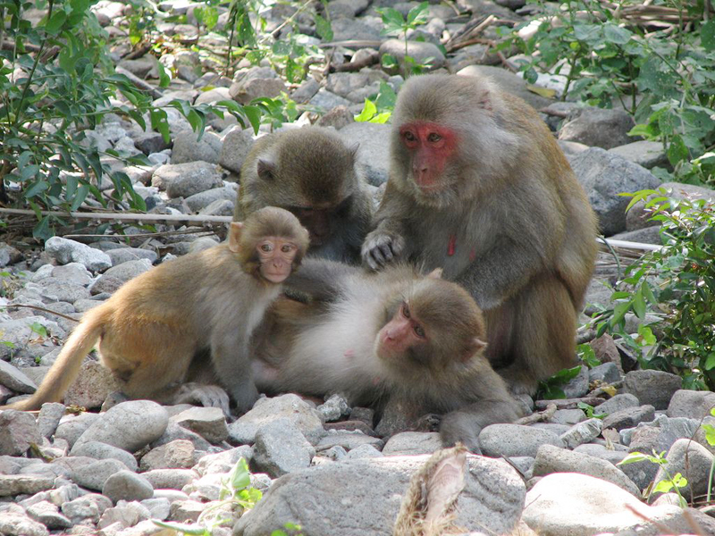 Mom monkey and babies