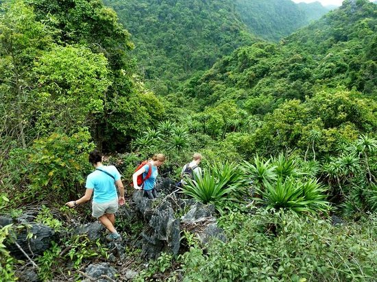 Full day Hiking Cat Ba National Park 3
